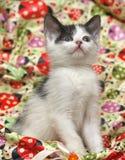 Black and white kitten Stock Images