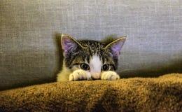 Black and White Kitten on Brown Textile Stock Photo