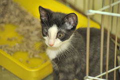 Black and white kitten in a cage at the shelter Stock Photos