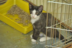 Black and white kitten in a cage at the shelter Royalty Free Stock Photo