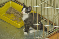 Black and white kitten in a cage at the shelter Stock Image