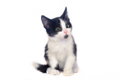 Black and white kitten, cat. Black and white kitten on a white background, isolated black and white cat Stock Photo