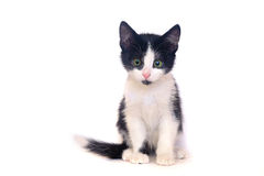 Black and white kitten, cat. Black and white kitten on a white background, isolated black and white cat Royalty Free Stock Photography