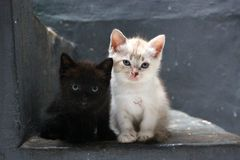 The black and white kitten. The cute black and white kitten expression Stock Image
