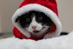Black and white kitten dressed in a santa costume. For christmas Stock Photos