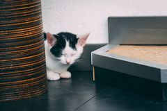 Black and white kitten falling asleep. Cute little kitten almost falling asleep on a black floor Stock Images