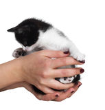 Black and white kitten Royalty Free Stock Images
