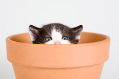 Black and white kitten and a flower pot Stock Photo