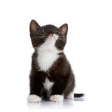 Black and white kitten. Royalty Free Stock Images