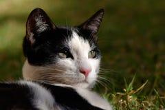 Black and white kitten Royalty Free Stock Photos