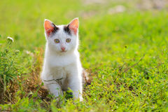 Black and white kitten. In the grass Royalty Free Stock Photos