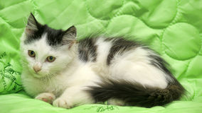 Black and white kitten on a green Stock Image