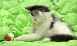 Black and white kitten on a green Stock Photos