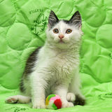 Black and white kitten on a green Royalty Free Stock Photos