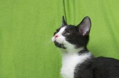 Black and white kitten on green Stock Photos