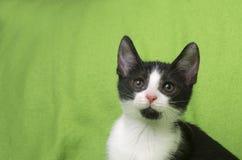 Black and white kitten on green Stock Images