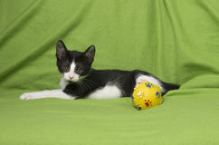Black and white kitten on green Stock Image