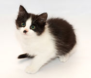 Black and white kitten with green eyes sits Stock Images