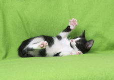 Black and white kitten on green Royalty Free Stock Photography