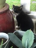 Can you spot the kitten on this picture?. A black and white kitten hiding in the garden behind the maguey stock photos