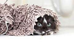 Black-white kitten hiding and peeking Stock Photos