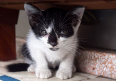 Black and white kitten lay under shelf Stock Images