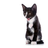 Black and white kitten licks lips Royalty Free Stock Image
