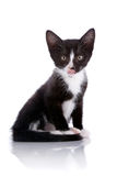 Black and white kitten licks lips on a white background. Stock Photo