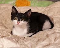 Black and white kitten lying on bed Royalty Free Stock Photos