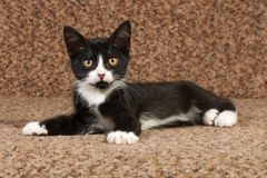Black and white kitten lying on couch Royalty Free Stock Photography