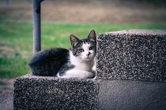 Black and White Kitten Lying on Gray Concrete Stair Stock Photography
