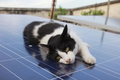 Black and white kitten lying on household solar panel on open-ro. Oftop with plants in far background Stock Image