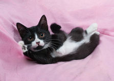 Black and white kitten lying on pink Royalty Free Stock Photography