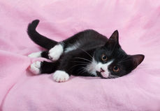 Black and white kitten lying on pink Stock Photography