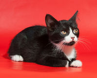 Black and white kitten lying on red Royalty Free Stock Images
