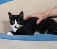 Black and white kitten lying on sofa Royalty Free Stock Photos
