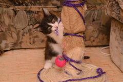 Black and white kitten. Near the point of claw with a toy Royalty Free Stock Photos
