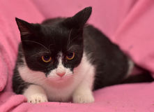 Black and white kitten Stock Photo