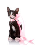 Black and white kitten with a pink tape. Royalty Free Stock Image