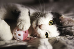 Black and white kitten playing. With a pink toy Stock Photography