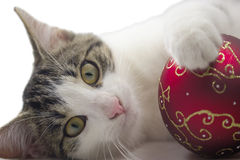 Black and white kitten is playing with a red christmas ball. Royalty Free Stock Photos