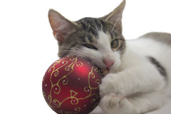 Black and white kitten is playing with a red christmas ball. Royalty Free Stock Photo