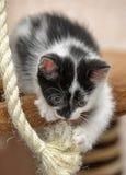 Black and white kitten playing Royalty Free Stock Photos