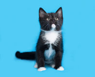 Black and white kitten sitting on blue Royalty Free Stock Photography