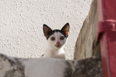 Black and white kitten sitting on stairs Stock Photography