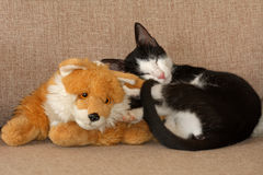 Black and white kitten sleeping Stock Photography