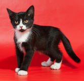 Black and white kitten standing on red Stock Image