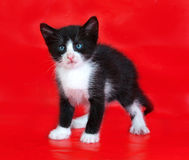 Black and white kitten standing on red Royalty Free Stock Photography