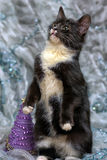 Black and white kitten. Stands behind the hind legs Royalty Free Stock Photography