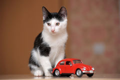 Black and white kitten and  toy car Royalty Free Stock Photography